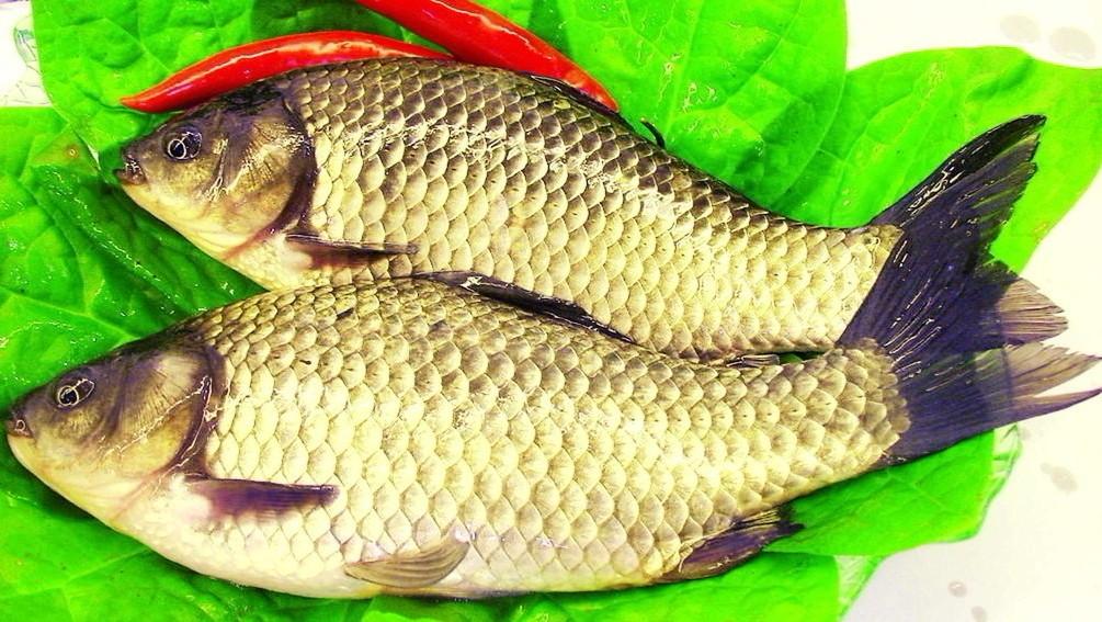 鲫鱼营养价值剖析