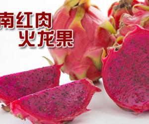 [深]全市抢购海南红肉火龙果