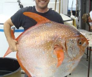 人类发现的第一条温血鱼