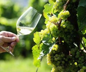 你知道白葡萄酒的王者雷司令吗?