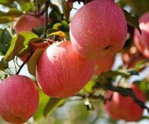 数量全省第一!烟台苹果、葡萄酒被纳入中欧互认保护