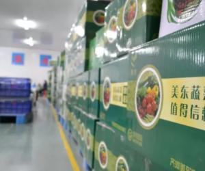 陶朗助力齐河美东打造高端超市小包装果蔬品牌
