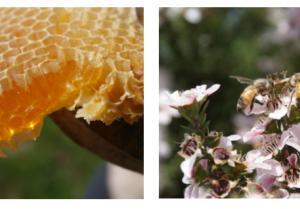 BEE+麦卢卡蜂蜜,大自然馈赠的纯粹佳品
