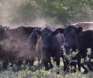 阿根廷牛肉寻味之旅圆满完成2020有望加大中阿牛肉进出口贸易往来